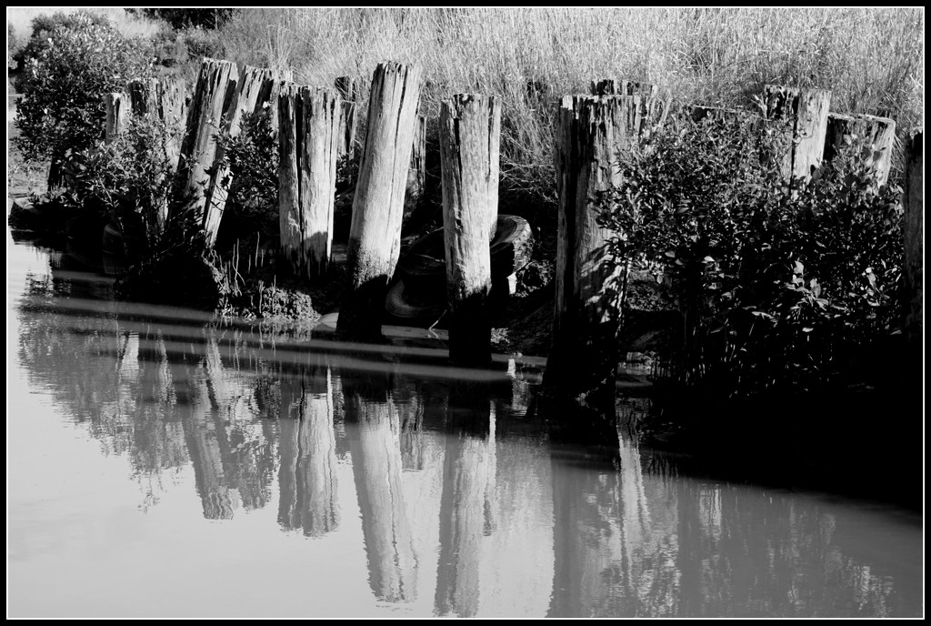 The old wharf piles by dide