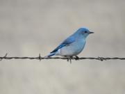 11th Mar 2019 - Bluebird