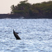 Spinner Dolphin Coming Up for a Spin