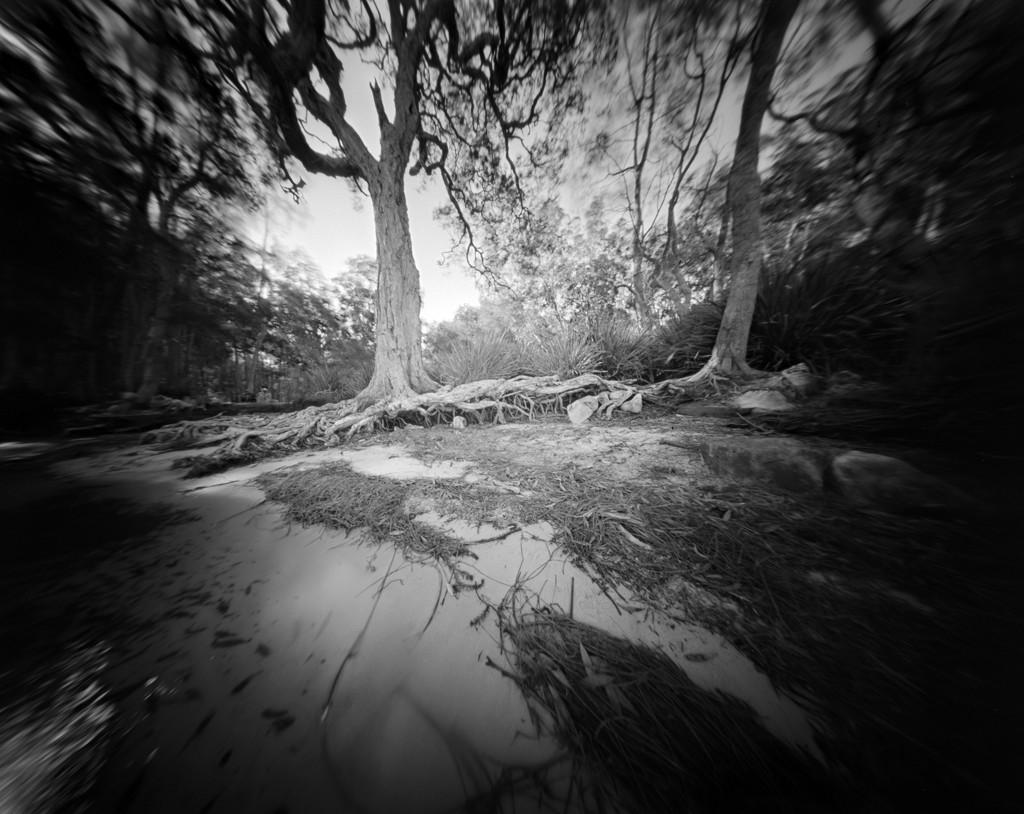 Roots by peterdegraaff