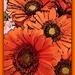 Orange gerbera- take 2