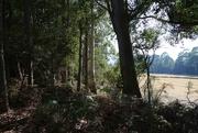 11th Mar 2019 - Inala - Tasmania