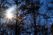 12th Mar 2019 - Sun Burst