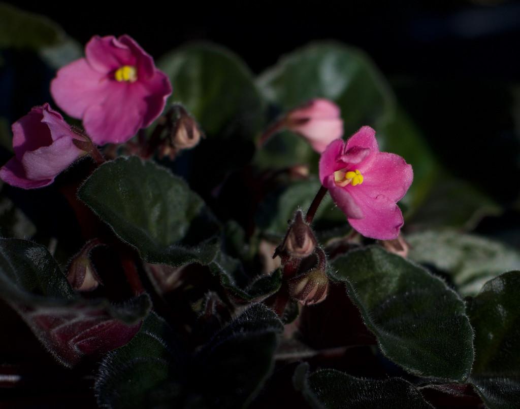 Finally Blooming! by loweygrace