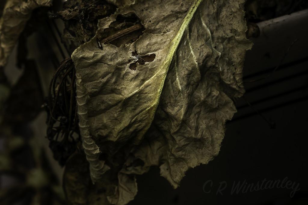 Leaf Decay by kipper1951