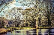 13th Mar 2019 - Woodland lake