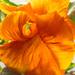 orange by haskar