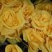 Yellow Silk Flowers