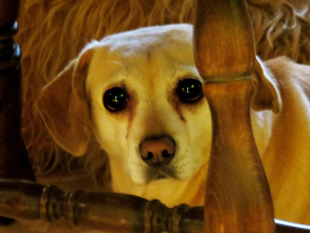 Peek-a-Boo Puppy by grammyn