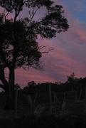 14th Mar 2019 - Sunset