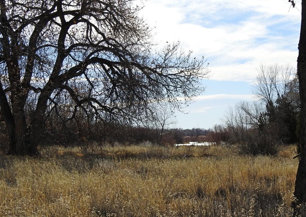 Albuquerque's Bosque in Winter by janeandcharlie