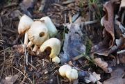 14th Mar 2019 - Wild Mushrooms...