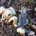 Wild Mushrooms...