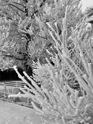 14th Mar 2019 - Frosty NM Morning