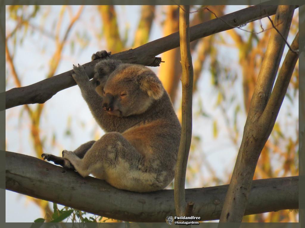 golden sunset by koalagardens