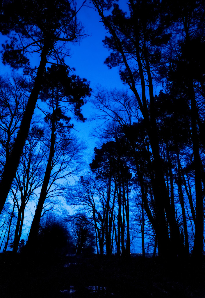 Bluehour Pinetrees by vignouse