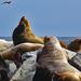 Sea Lion Sightseeing