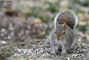 13th Mar 2019 - Squirrel