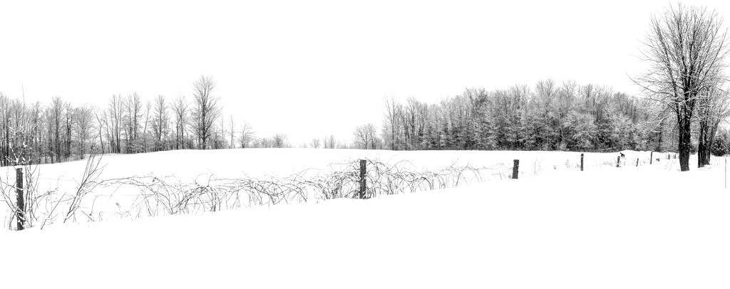 Panorama of our East Field by farmreporter