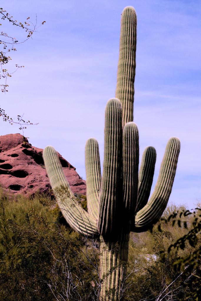 Saguaro by gtoolman8