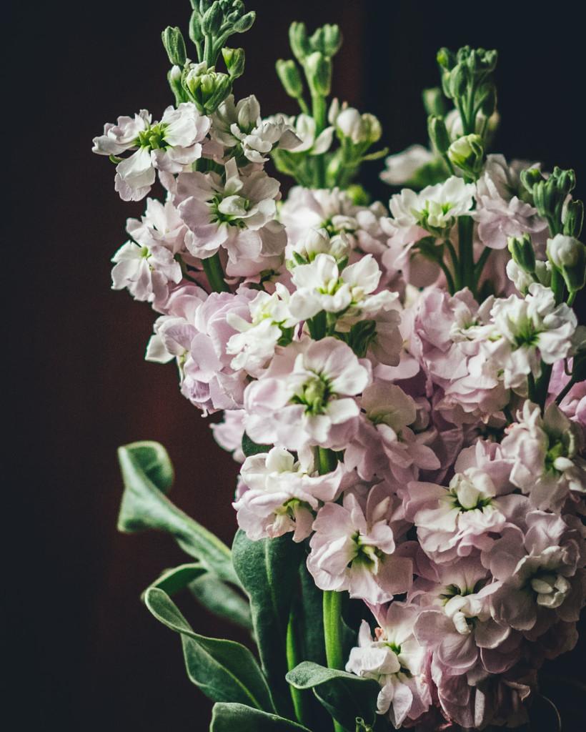 The girl's flowers by mamazuzi