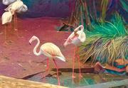 15th Mar 2019 - Flamingo Friday