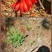 A little wild flower