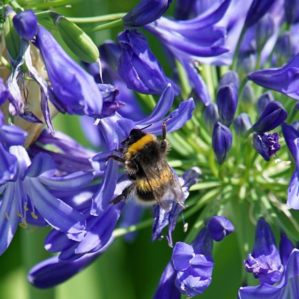 very small bee  by quietpurplehaze
