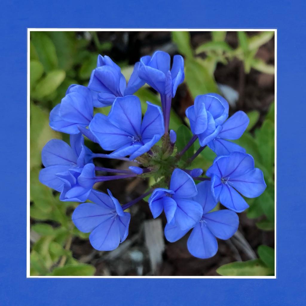 Framed Blue by shutterbug49