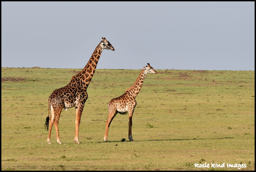 Little and large by rosiekind