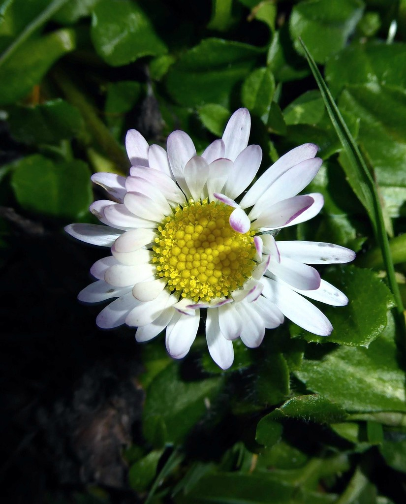 Daisy in the dark by 4rky
