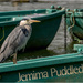 Grey Heron by pcoulson