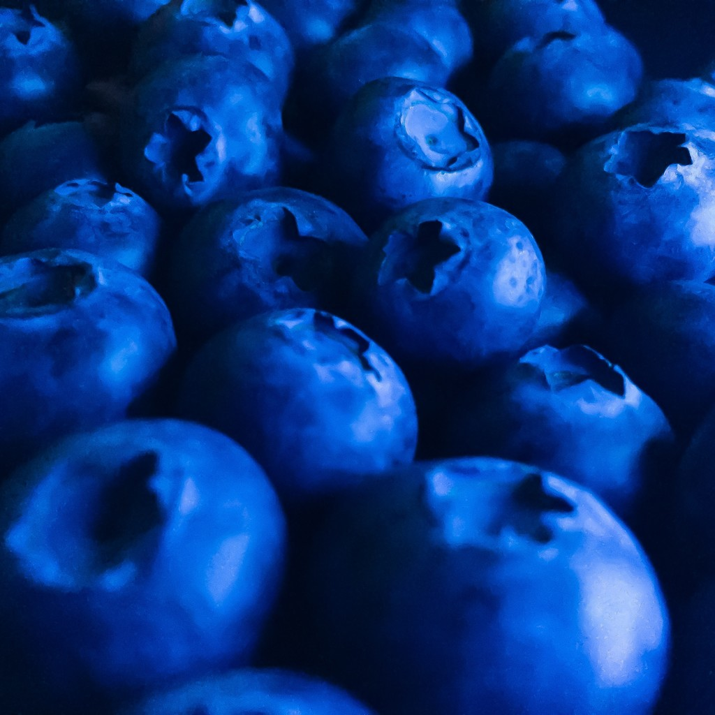 BLUEberries by imnorman
