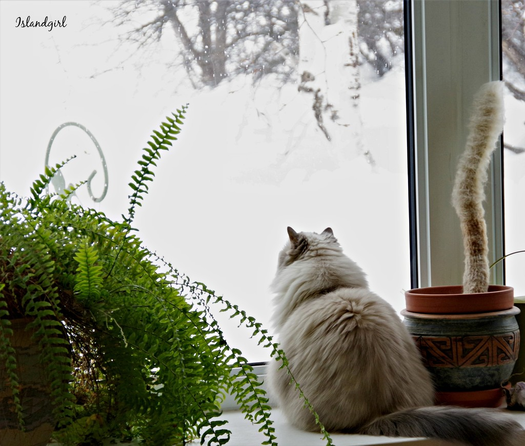 Holly waiting for Spring by radiogirl