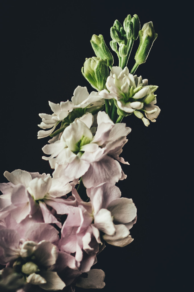 Flower details by mamazuzi