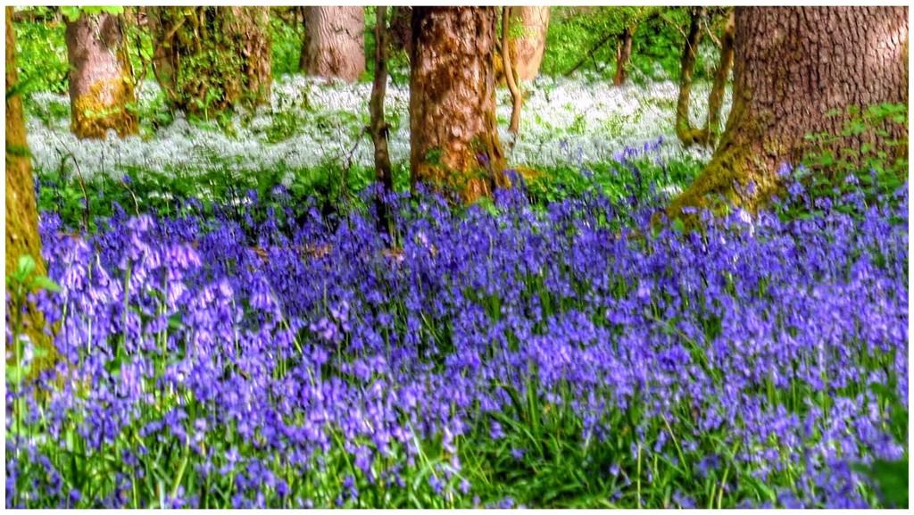 Purple!  by lyndamcg
