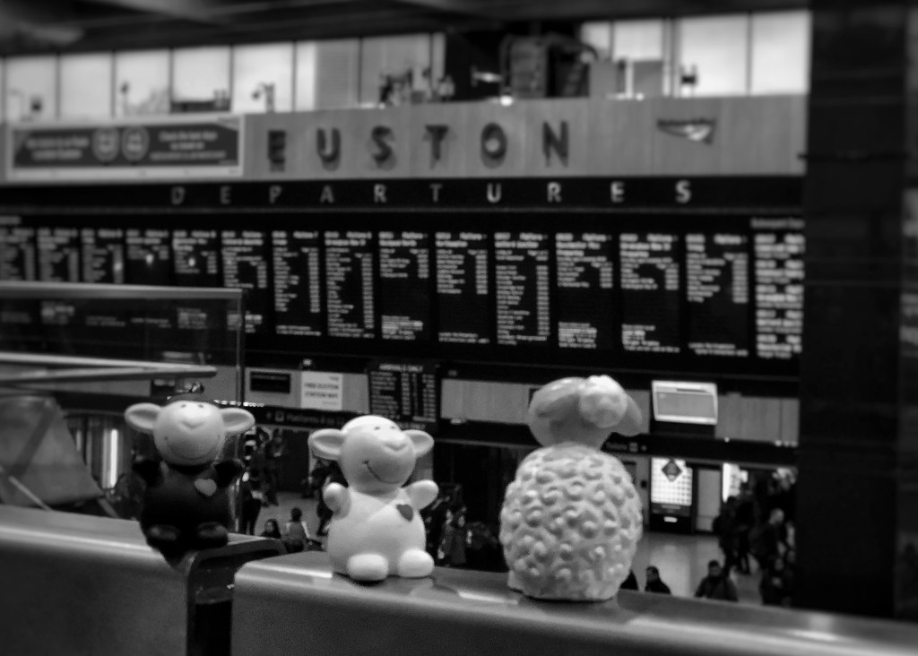 Looking sheepish waiting for train departure!  by bizziebeeme