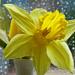 Yellow by craftymeg