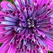 Purple Flower by shutterbug49