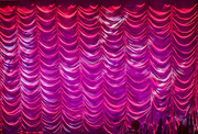 3rd Mar 2019 - Pink curtain call
