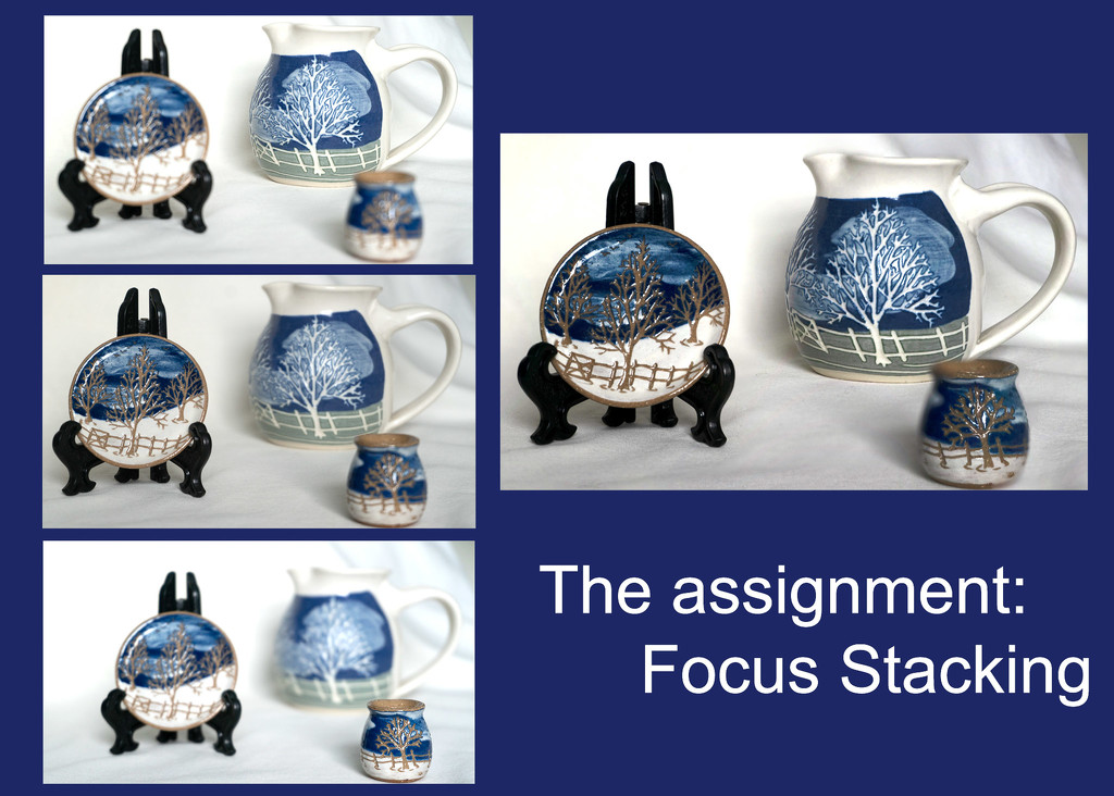 Focus stacking collage_365 by randystreat