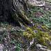New green moss