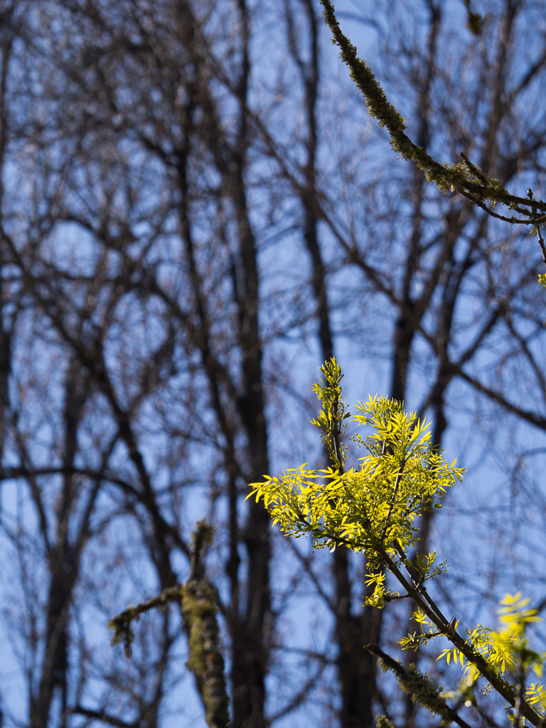 For Some Plants, Spring has Sprung by fotoblah