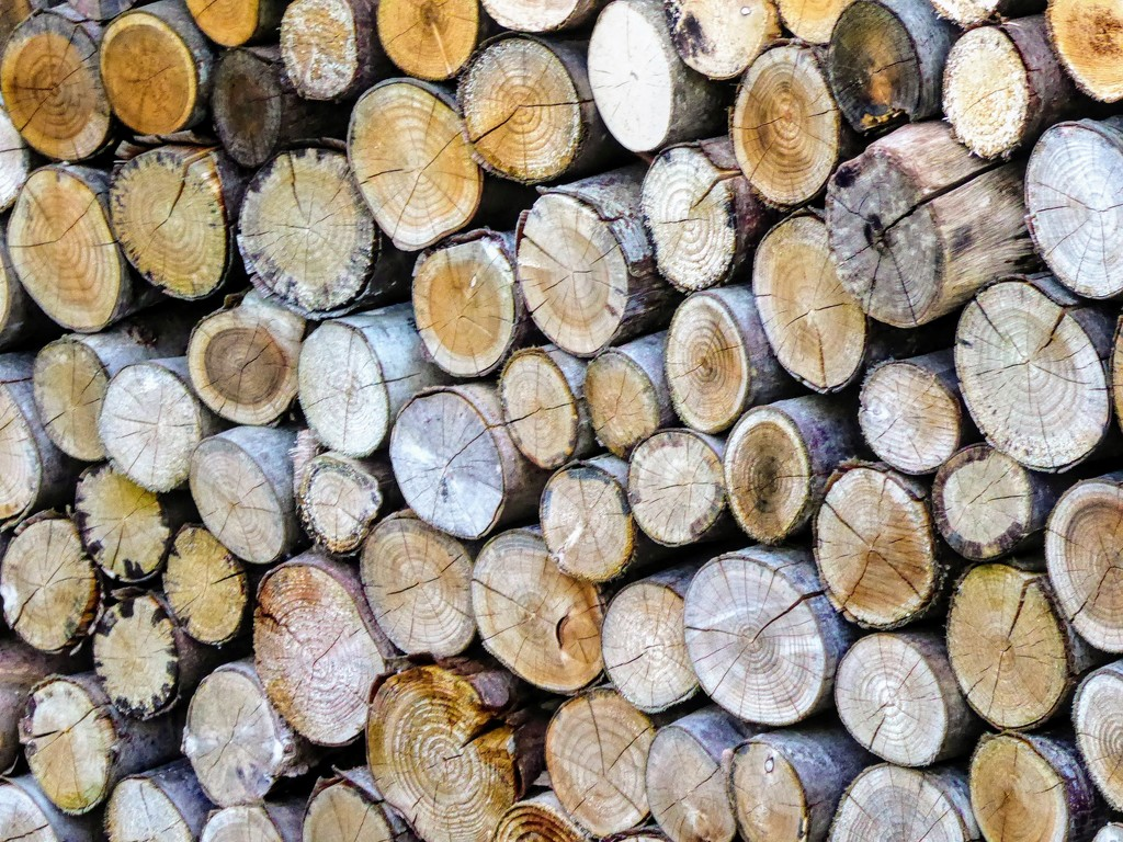 Woodpile by 4rky