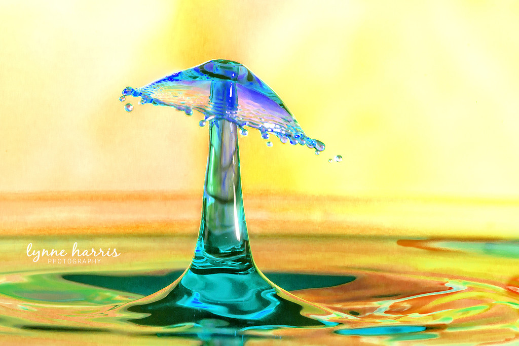 Umbrella Drop by lynne5477