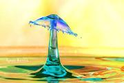 17th Mar 2019 - Umbrella Drop
