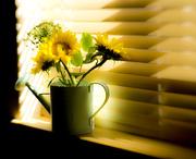 17th Mar 2019 - Spring in a window