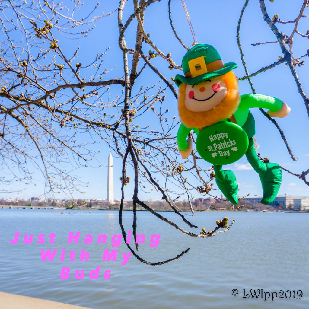 Happy St. Patty's Day by lesip