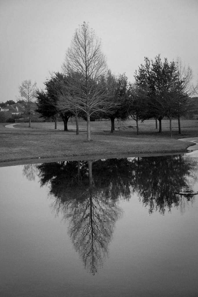 Black and White Reflection by judyc57