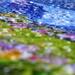Spring puzzle